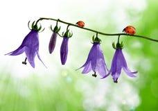 λουλούδια κουδουνιών Στοκ φωτογραφία με δικαίωμα ελεύθερης χρήσης