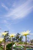 Λουλούδια κρίνων ύδατος στοκ εικόνα με δικαίωμα ελεύθερης χρήσης