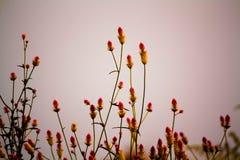 λουλούδια κυματιστά Στοκ εικόνα με δικαίωμα ελεύθερης χρήσης