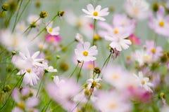 λουλούδια κόσμου Στοκ Φωτογραφίες