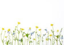 Λουλούδια λιβαδιών με τις νεραγκούλες τομέων και pansies απομονωμένος στο άσπρο υπόβαθρο Τοπ όψη Επίπεδος βάλτε Στοκ εικόνα με δικαίωμα ελεύθερης χρήσης