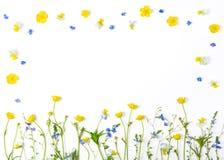 Λουλούδια λιβαδιών με τις νεραγκούλες τομέων και pansies απομονωμένος στο άσπρο υπόβαθρο Τοπ όψη Επίπεδος βάλτε Στοκ φωτογραφία με δικαίωμα ελεύθερης χρήσης