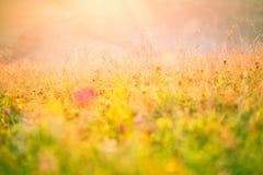 Λουλούδια λιβαδιών στον ήλιο πρωινού Στοκ Εικόνα