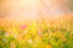 Λουλούδια λιβαδιών στον ήλιο πρωινού Στοκ εικόνα με δικαίωμα ελεύθερης χρήσης