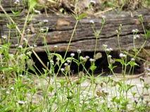 Λουλούδια λιβαδιών στον ηλιόλουστο τομέα με το παλαιό υπόβαθρο ξυλείας Φύση στοκ φωτογραφία με δικαίωμα ελεύθερης χρήσης