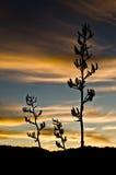 Λουλούδια λιναριού στο ηλιοβασίλεμα Στοκ φωτογραφία με δικαίωμα ελεύθερης χρήσης