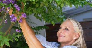 Λουλούδια μαδήματος με ειδικές ανάγκες γυναικών από τις εγκαταστάσεις στο μέρος 4k απόθεμα βίντεο