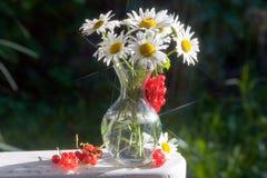 λουλούδια μαργαριτών αν&t Στοκ φωτογραφία με δικαίωμα ελεύθερης χρήσης