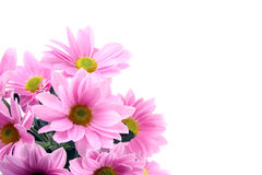 λουλούδια μαργαριτών Στοκ εικόνα με δικαίωμα ελεύθερης χρήσης