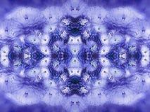 Λουλούδια - μπλε-άσπρο χρυσάνθεμο στο μουτζουρωμένο υπόβαθρο Μπλε-χρωματισμένο εκλεκτής ποιότητας floral υπόβαθρο convolvulus σύν Στοκ Εικόνα