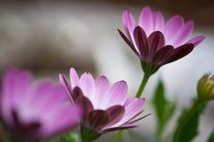 λουλούδια ομορφιάς Στοκ Φωτογραφίες