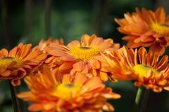 λουλούδια ομορφιάς Στοκ εικόνες με δικαίωμα ελεύθερης χρήσης