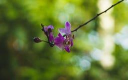 Λουλούδια ορχιδεών ινδικού καλάμου στοκ φωτογραφία με δικαίωμα ελεύθερης χρήσης