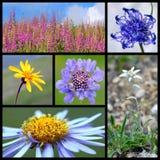 λουλούδια ορών Στοκ Φωτογραφίες
