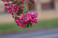 Λουλούδια πάρκων ANS Στοκ Φωτογραφία