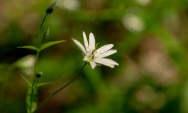 Λουλούδια πάρκων ANS Στοκ Εικόνες
