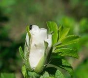 Λουλούδια πάρκων ANS Στοκ Φωτογραφίες