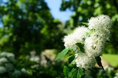 Λουλούδια πάρκων ANS Στοκ εικόνα με δικαίωμα ελεύθερης χρήσης