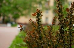 Λουλούδια πάρκων ANS Στοκ φωτογραφία με δικαίωμα ελεύθερης χρήσης