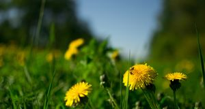 Λουλούδια πάρκων ANS Στοκ εικόνες με δικαίωμα ελεύθερης χρήσης