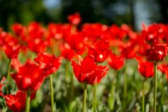 Λουλούδια πάρκων ANS Στοκ φωτογραφίες με δικαίωμα ελεύθερης χρήσης