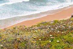 Λουλούδια, παραλία και κύματα σε Arrifana Στοκ φωτογραφία με δικαίωμα ελεύθερης χρήσης
