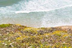 Λουλούδια, παραλία και κύματα σε Arrifana Στοκ Εικόνες