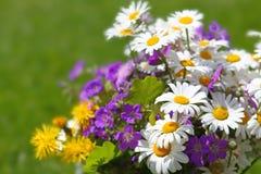 λουλούδια πεδίων Στοκ Φωτογραφίες
