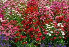 λουλούδια πεδίων στοκ φωτογραφία με δικαίωμα ελεύθερης χρήσης