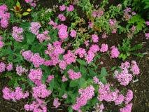 Λουλούδια Πενσυλβανία στοκ φωτογραφία με δικαίωμα ελεύθερης χρήσης