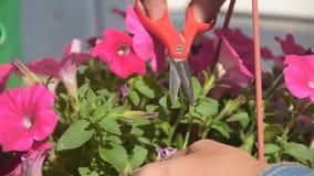 Λουλούδια περικοπής κηπουρών κοριτσιών στην είσοδο του σπιτιού φιλμ μικρού μήκους