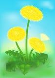 Λουλούδια πικραλίδων και η πεταλούδα απεικόνιση αποθεμάτων