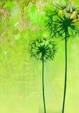 λουλούδια πικραλίδων Στοκ εικόνες με δικαίωμα ελεύθερης χρήσης