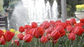 Λουλούδια ποτίσματος υπαλλήλων δήμου με μια εύκαμπτη μάνικα στο πάρκο απόθεμα βίντεο