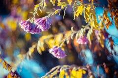 Λουλούδια που ανακτούν από τον παγετό νύχτας του στις αρχές χειμερινού πρωινού στοκ φωτογραφίες