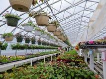 Λουλούδια που αναπτύσσουν στο θερμοκήπιο φύλλων αλουμινίου του κέντρου κήπων Στοκ Εικόνα