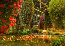Λουλούδια που ανθίζουν στο θερμοκήπιο Στοκ εικόνες με δικαίωμα ελεύθερης χρήσης