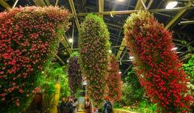 Λουλούδια που ανθίζουν στο θερμοκήπιο Στοκ φωτογραφίες με δικαίωμα ελεύθερης χρήσης