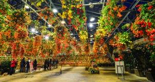 Λουλούδια που ανθίζουν στο θερμοκήπιο Στοκ Εικόνα