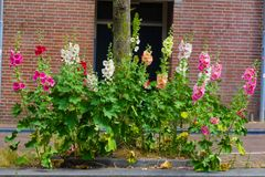 Λουλούδια που ανθίζουν το καλοκαίρι στοκ φωτογραφία με δικαίωμα ελεύθερης χρήσης