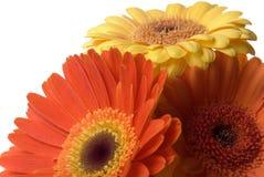 λουλούδια που απομονώνονται Στοκ Εικόνες