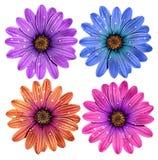 λουλούδια που απομονών Στοκ φωτογραφία με δικαίωμα ελεύθερης χρήσης