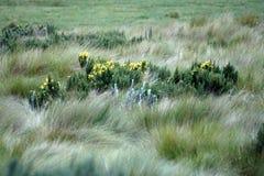 Λουλούδια που περιβάλλονται από την παχιά χλόη στην οικολογική επιφύλαξη Antisana Στοκ φωτογραφία με δικαίωμα ελεύθερης χρήσης