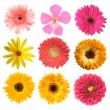 λουλούδια που τίθεντα&iot Στοκ Φωτογραφίες