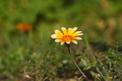 λουλούδια ρομαντικά Στοκ Εικόνες