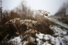 λουλούδια σε ένα άσπρο χειμερινό υπόβαθρο στοκ εικόνα