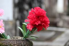 Λουλούδια σε ένα νεκροταφείο στοκ εικόνες