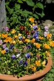 λουλούδια σε δοχείο Στοκ Φωτογραφία