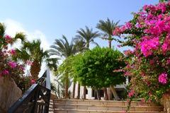 Λουλούδια σε Egypr στοκ φωτογραφία