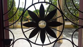 Λουλούδια σιδήρου που είναι όμορφα, ανθεκτικός στοκ φωτογραφίες
